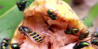 melissa-troei