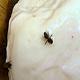 Μελισσοκομική Μπάρκας Επικοινωνία
