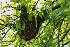 Κηρήθρες μελισσοκομίας